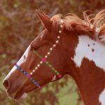 Pferdetrense richtig ausmessen